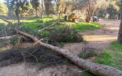 Μέσα σε 1,5 χρόνο έγιναν στο Μητροπολιτικό Πάρκο «Αντώνης Τρίτσης» περισσότερα από όσα έγιναν τα προηγούμενα 4 χρόνια – Προτεραιότητά μας η ασφάλεια των πολιτών και η προστασία του Πάρκου